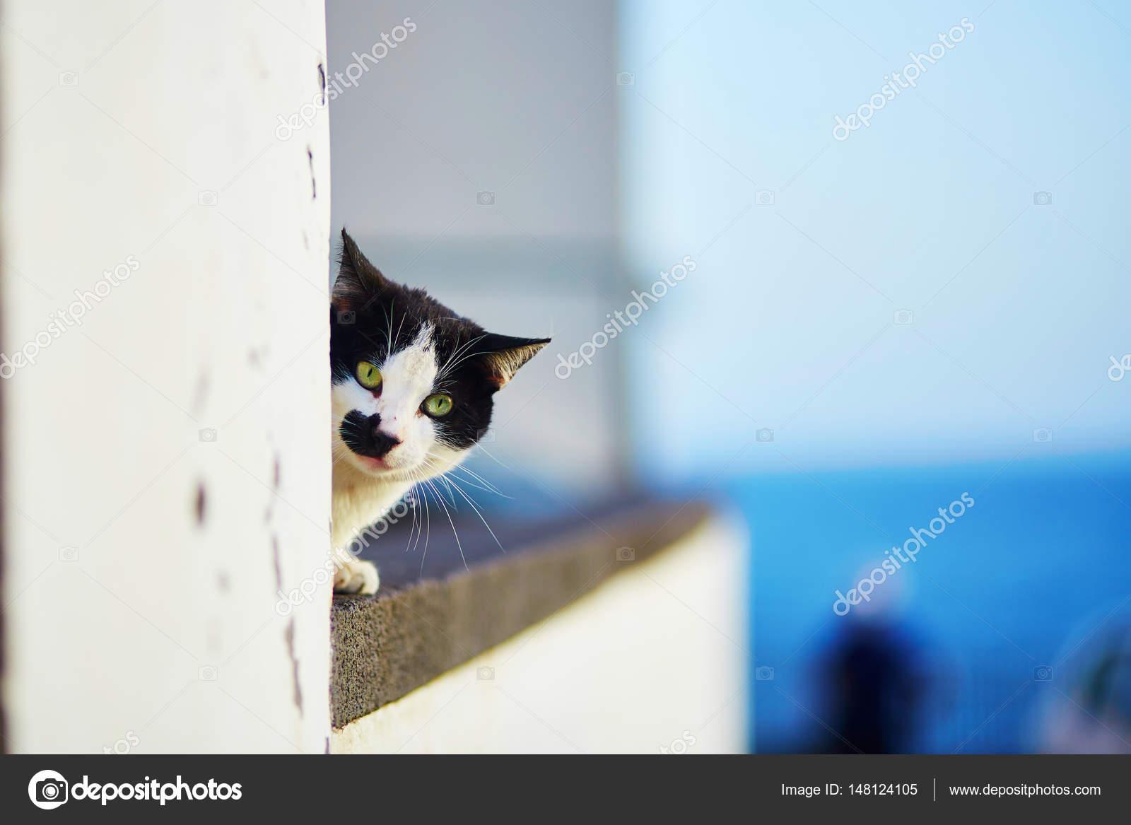 belles lèvres noires de la chatte