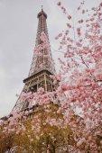 Spring, Párizsban. Gyönyörű fa, és az Eiffel-torony