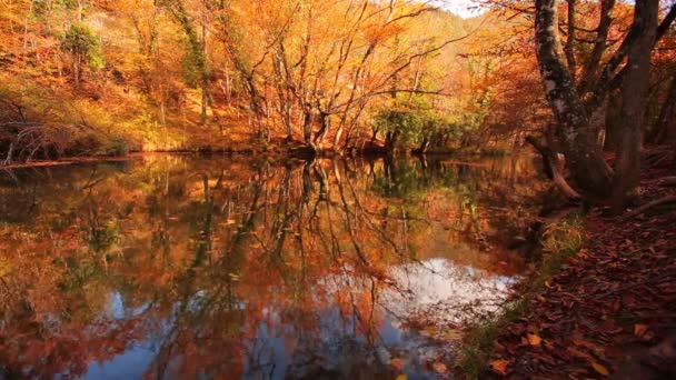 Natural scene of forest in autumn. Forest In The Mountains. Mountain River. Stream With Cold Water.