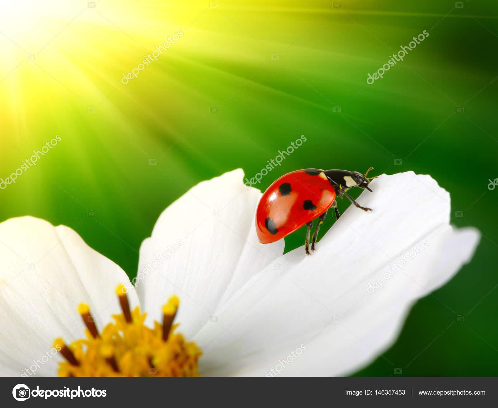 Marienkäfer Und Blumen Stockfoto Ale Ks 146357453