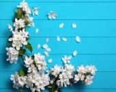 Tavaszi virágok a fa