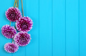 Flowers on blue painted wooden planks.