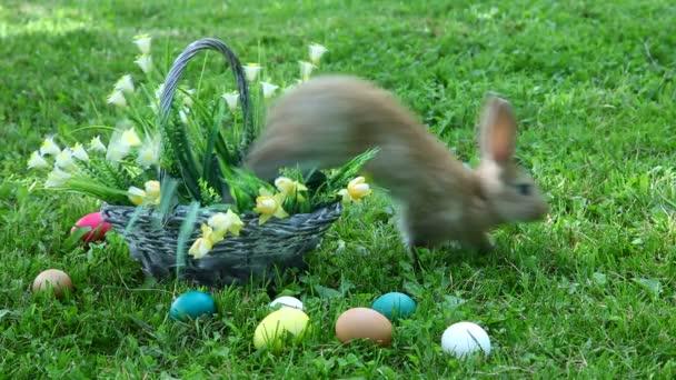 Little rabbit sitting at the basket