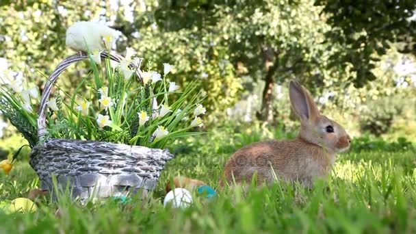Cute chicks and bunny in the garden