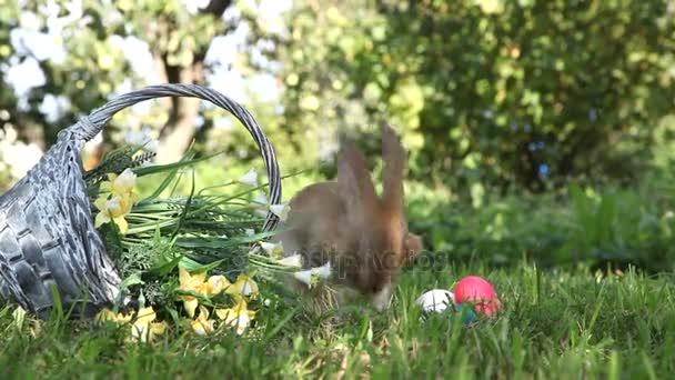 Little rabbit in the garden