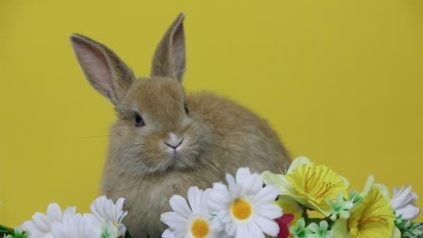 Kaninchen auf den Blumen.