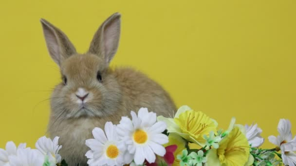 Bunny rabbit on the flowers.
