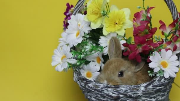 Hase auf den Blumen.