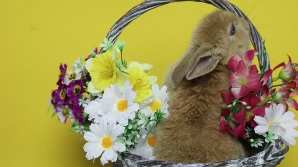 Coniglio di coniglietto sui fiori.