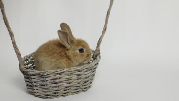 Roztomilý králík sedí v koši