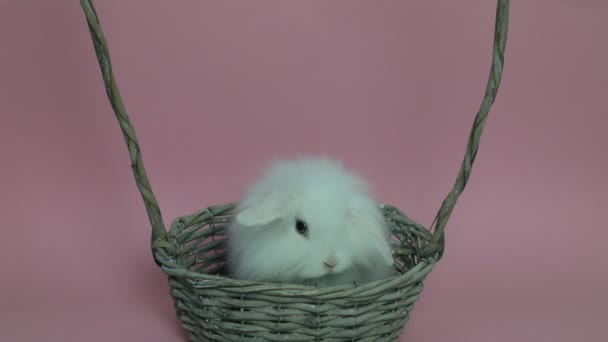Cute rabbit sitting in a basket