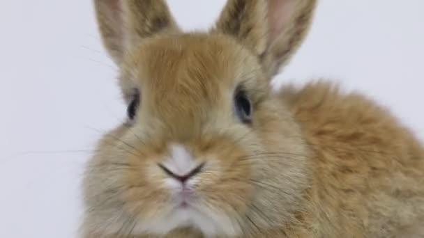 Bunny rabbit sitting
