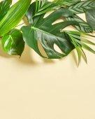 Různé tropické listy
