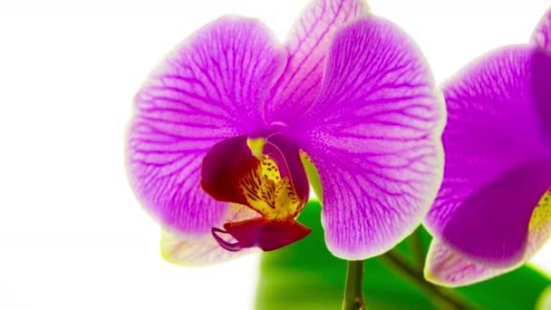 Květy orchidejí, 4 k zastavení pohybu