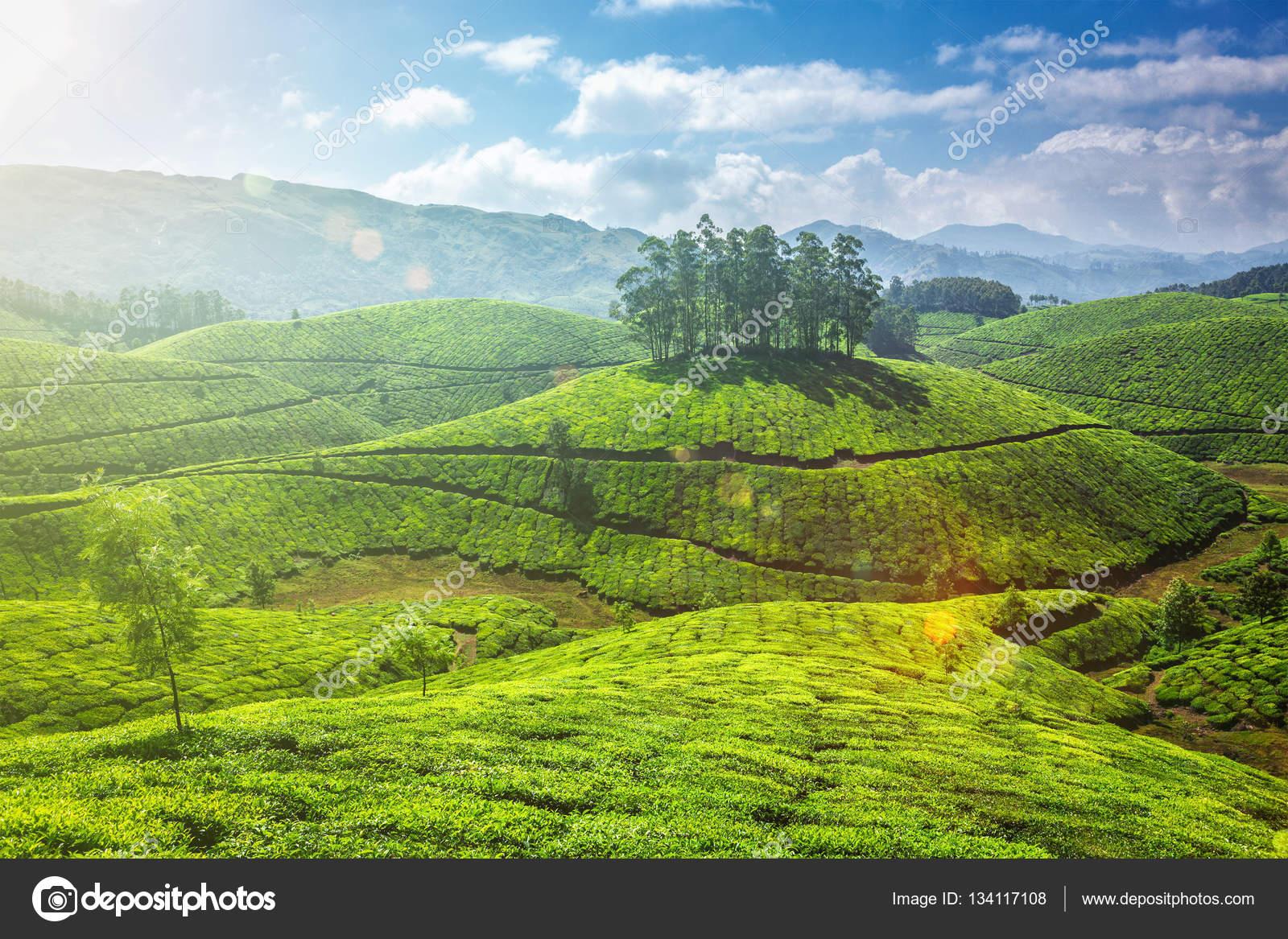 Tea plantations in Kerala, India — Stock Photo ...