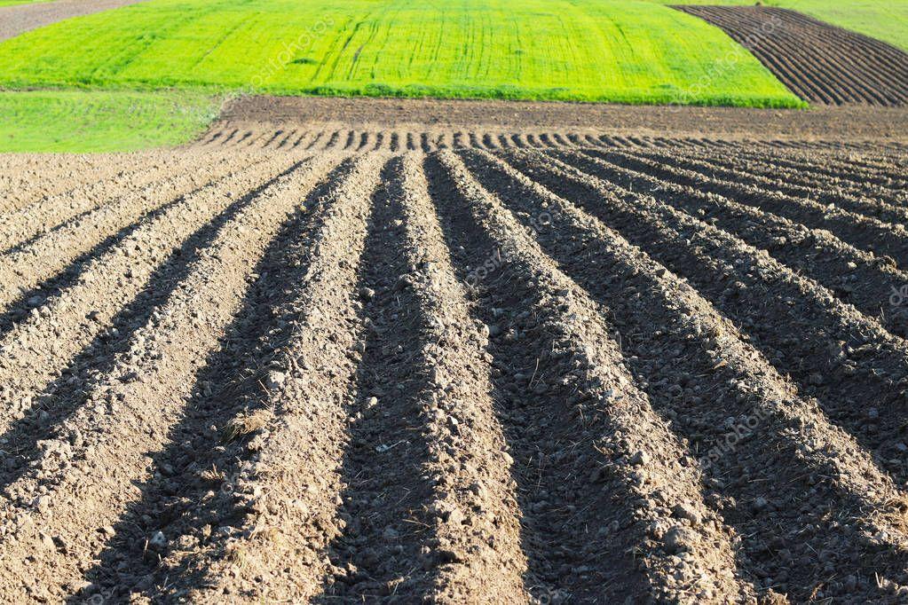planted farmer field