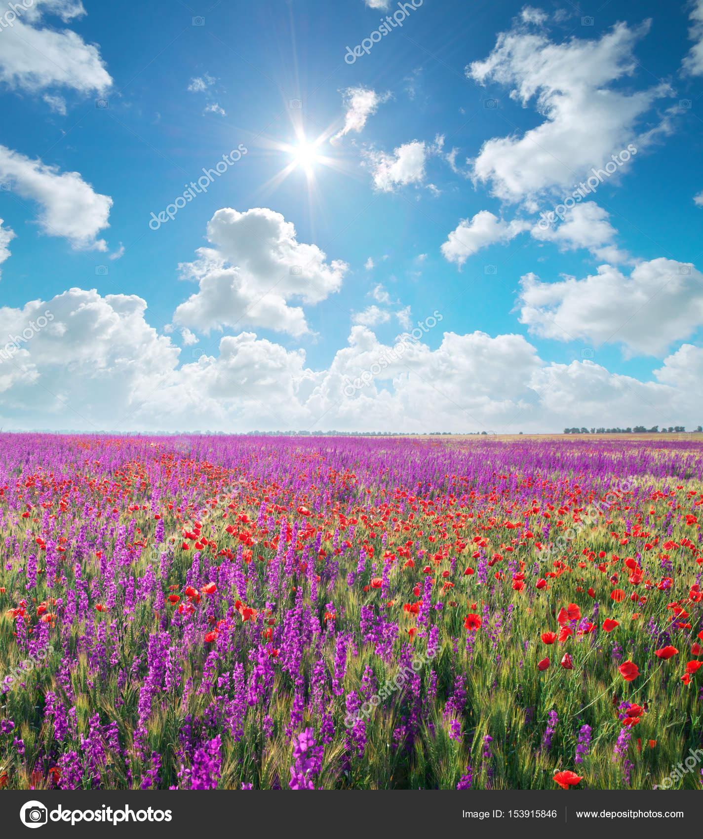Prato di fiori di primavera viola — Foto Stock © zatvor #153915846
