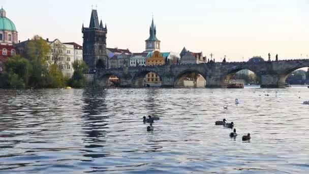 labutě na Vltavě v Praze, Česká republika