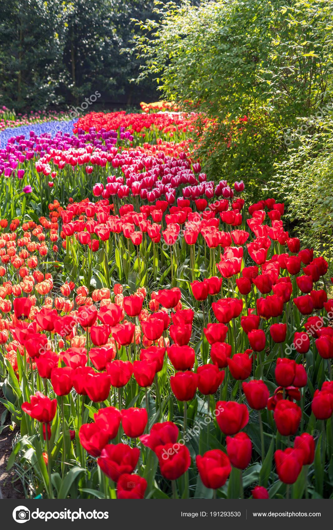 Güzel çiçekler Stok Foto Maverickette 191293530