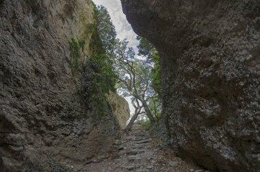 Crimea. View of a narrow gorge.