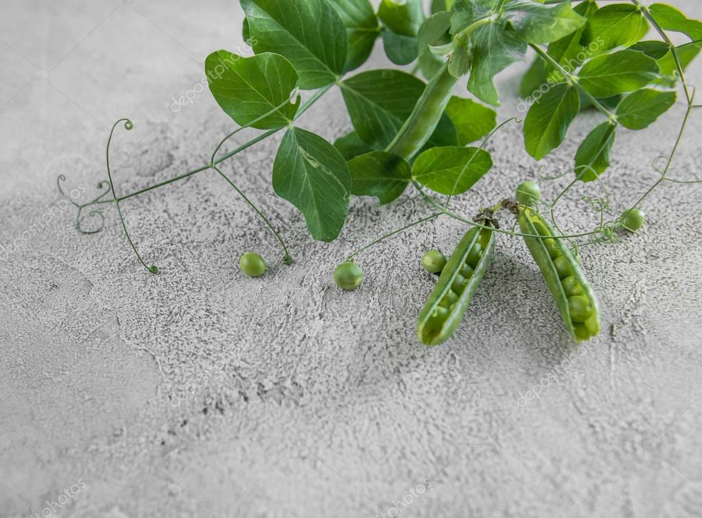 Green peas in shells, home farming