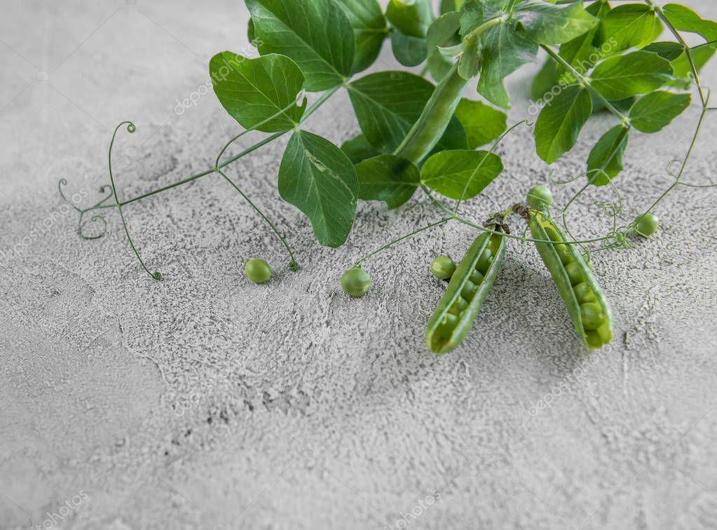 Green peas in shells, home farming