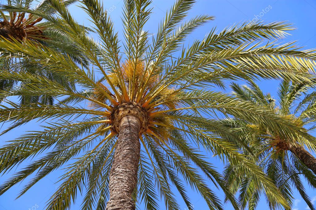 Branches of beautiful palm trees