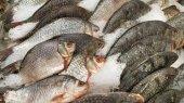Raffreddato a pesce su ghiaccio per la vendita nel mercato
