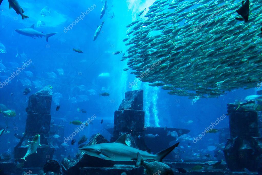 Spousta ryb pof