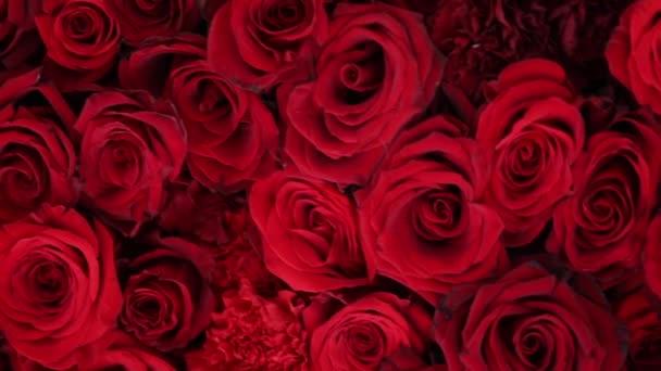 Natürliche rote Rosen Hintergrund Nahaufnahme