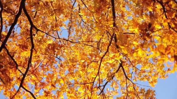 Padající podzimní listy slunce