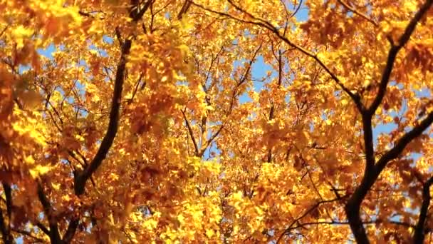 Lehulló őszi levelek nap