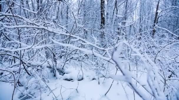 Zasněžené větve v lese.