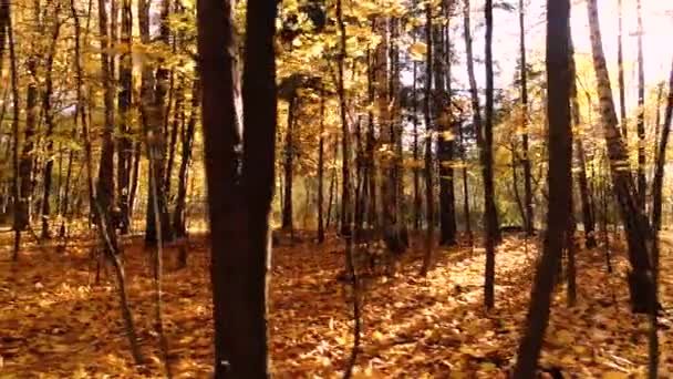 Colorful autumn forest wood