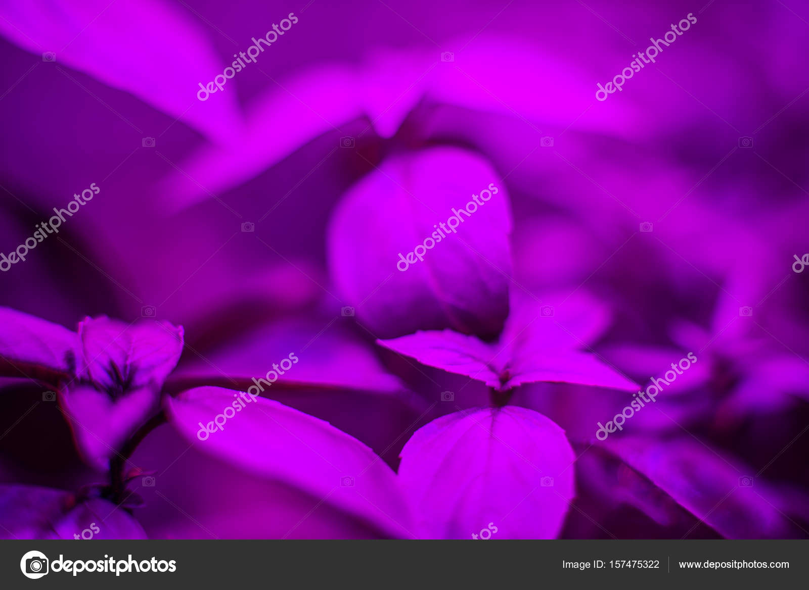 LED verlichting van planten in kassen — Stockfoto © Yarygin #157475322