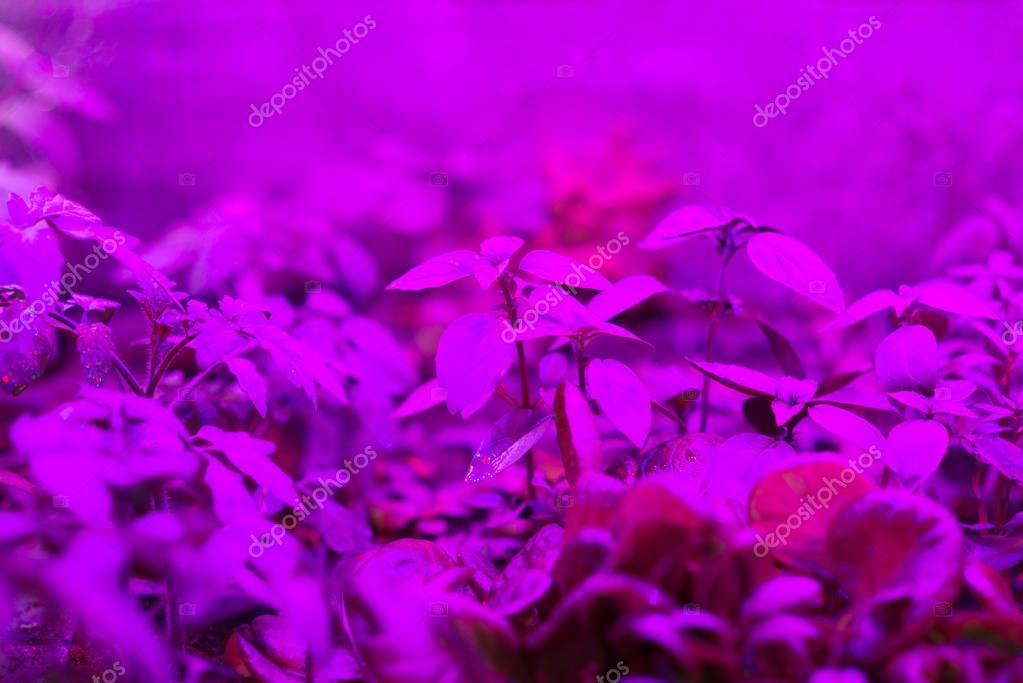 indoor LED grow lights for home-grows