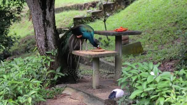 Ptáci se živí na stůl v parku