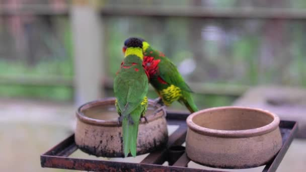 Burung Pelangi Stok Video Burung Pelangi Rekaman Bebas Royalti Halaman 5 Depositphotos