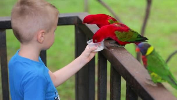 Chlapec krmení papoušků s rukama v Zoo