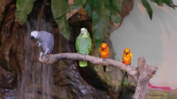 Group of Parrots on a Branch in the Park