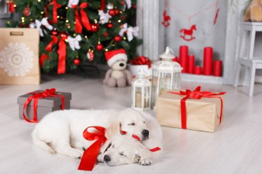 Two golden retriever puppies near christmas tree with gifts.