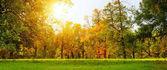 barevné podzimní park
