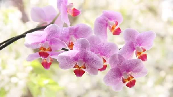 Krásné orchideje v okně