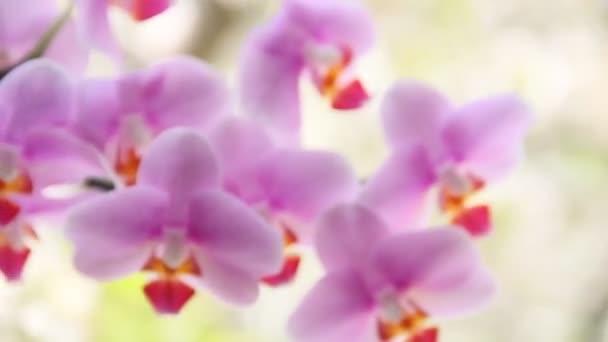 Gyönyörű orchideák az ablakban