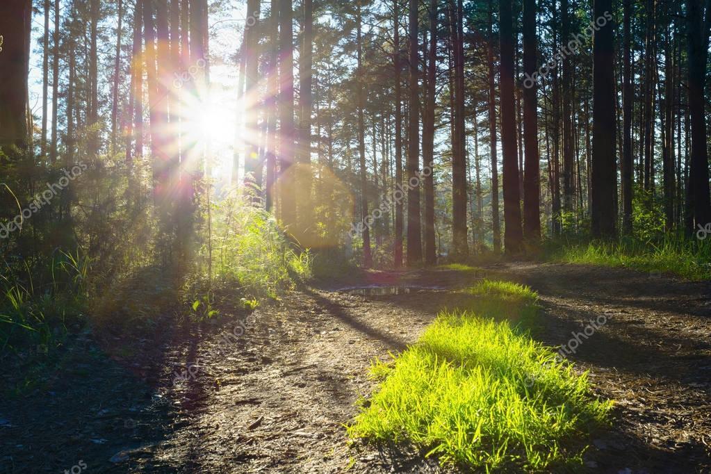 sunset light through woods
