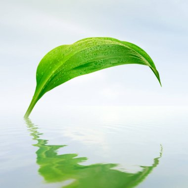 green leaf with drops reflections in water