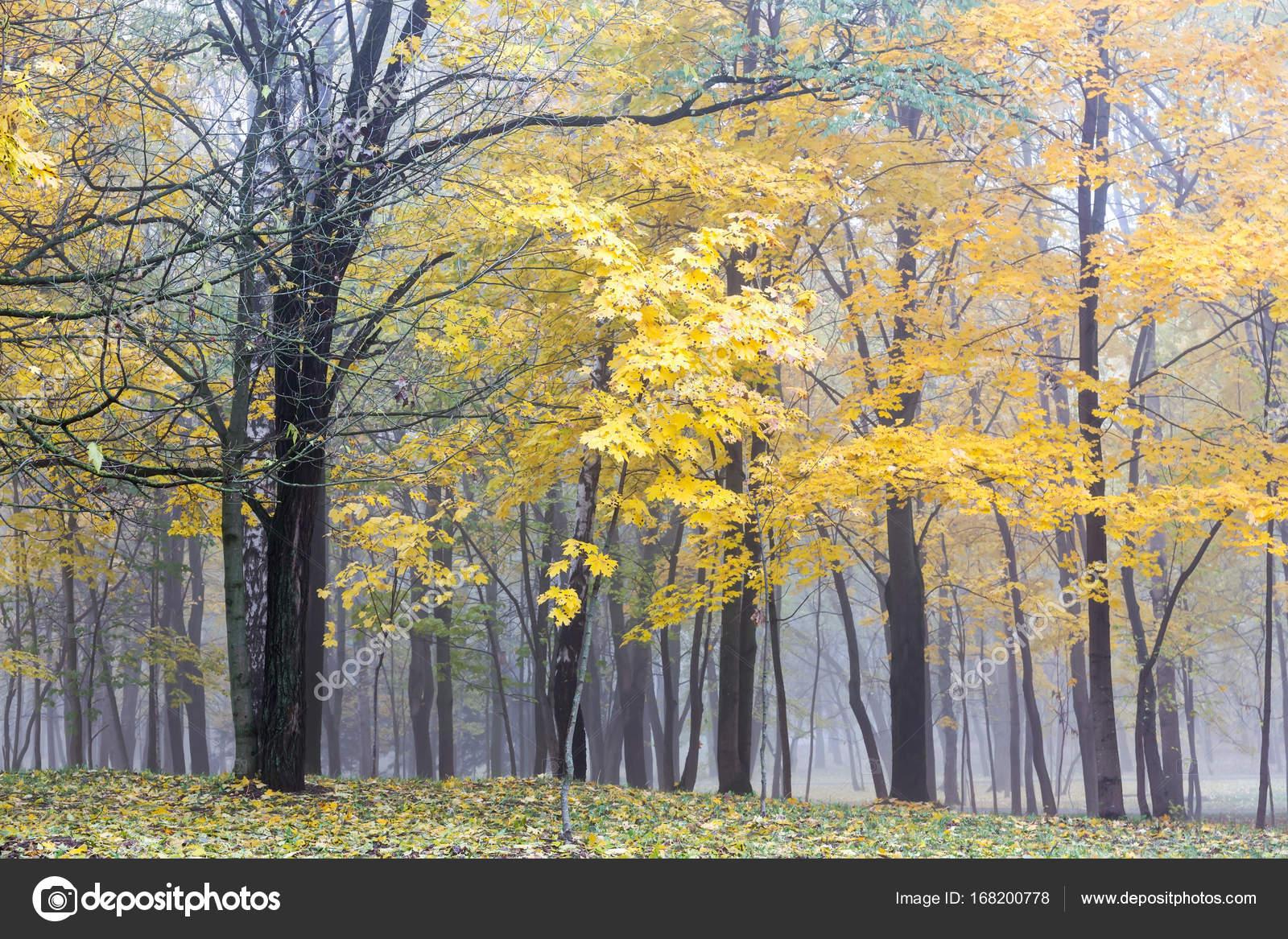 листвы золотой фото