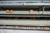 Fényképek Friss, nyers csirke tojás egy futószalagon, hogy átkerül a th