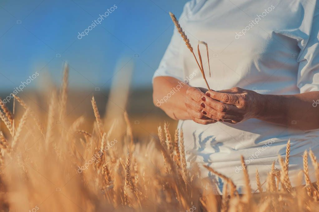 Wheat field, hands with wheat close-up