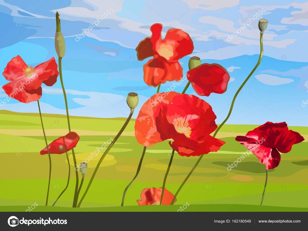 Poppy Red Flowers Stock Vector Chaoss 162180548